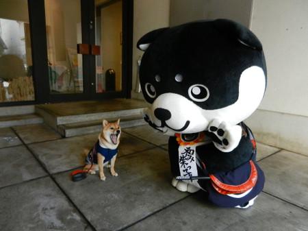 Shibako_016